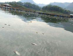 Curah Hujan Tinggi, Puluhan Ton Ikan di Waduk Saguling Tak Terselamatkan