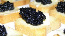 Telur ikan Sturgeon (Caviar)