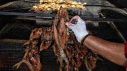 Warga Pulau Rupat mengolah ikan dukang menjadi ikan salai