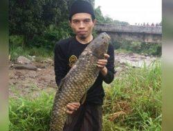 Warga Temukan Ikan 'Dewa' Berukuran Jumbo Pasca Banjir Bandang di Puncak Bogor