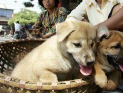 Gemolong Jadi Pemasok Daging Anjing, Begini Respon Dinas Terkait