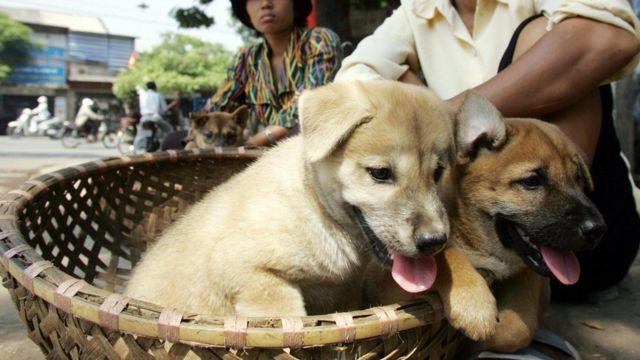 ilustrasi hewan anjing/bbc/ist