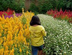 Rainbow Garden Gowa, Mengubah Sawah Menjadi Taman Bunga