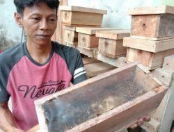 Panduan Beternak Lebah Madu Klanceng di Masa Pandemi, Bisa Hasilkan Rp 10 Juta Perbulan
