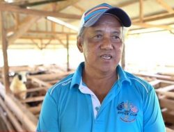 Sudjono, Pensiunan Pegawai Beternak Domba dan Hasilkan Ratusan Juta Perbulan