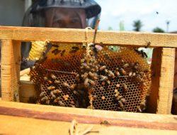 Mudah! Cara Budidaya Lebah Madu di Rumah, Cocok untuk Pemula