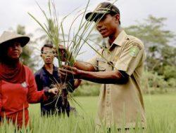 Peran Penyuluh dalam Memajukan Pertanian