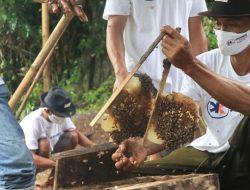 Konsisten Jadi Agen Pembangunan, Askrindo Bantu Tingkatkan Produksi Petani Madu