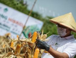 Jawa Barat Buka Pendaftaran Jadi Petani Milenial, Begini Cara Daftarnya