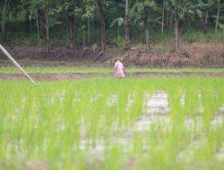 Lampung Siap Beri Bantuan Petani untuk Antisipasi Gagal Panen