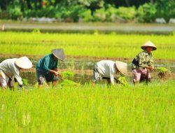 Anggota DPR: Sektor Pertanian Mampu Bertahan Saat Krisis Ekonomi Nasional