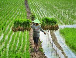 BPS Ungkap Petani Hadapi Sejumlah Tantangan di Saat Pandemi