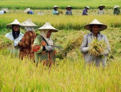 Sektor Pertanian Tumbuh Positif, Kementan: Semua karena Petani