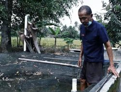Mengenal Mbah Sukidjo, Pembudidaya Ikan Gabus Tersohor dari Yogyakarta