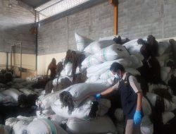 Tembus Pasar Dunia, Rumput Laut Jadi Primadona Baru di Batam
