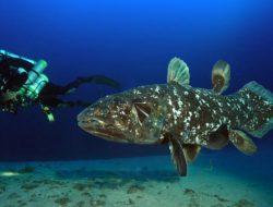 Coelacanth, Ikan Purba yang Dikira Punah 65 Juta Tahun Lalu