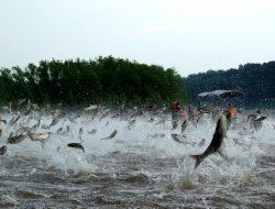 Dianggap Kotor, Amerika Serikat Ganti Nama Ikan Mas