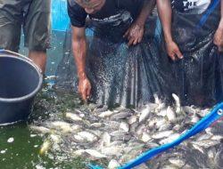 Cara Kampung Tangguh Jaya Menjaga Ketahanan Pangan dengan Budidaya Ikan dan Sayur