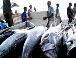 Penuhi Permintaan Jepang, Perum Perindo Akan Ekspor 4,5 Juta Kilogram Ikan