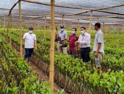 Bangun Kebun Bibit Mangrove di Pasuruan, Ini Tujuan KKP