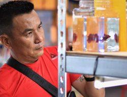 Suskes Budidaya Cupang, Mantan Guru Honorer Ini Raih Penghasilan Rp 40 Juta Sebulan