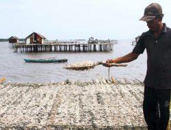Berbagai Kendala yang dihadapi Nelayan Udang Rebon di Bengkalis Riau