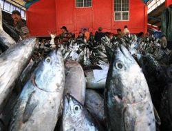 Mimika Jadi Penopang Pangan Perikanan di Bumi Cenderawasih