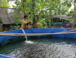 Gunakan Formula Pakan Herbal, Sekelompok Warga di Kediri Sukses Budidaya Ikan Lele