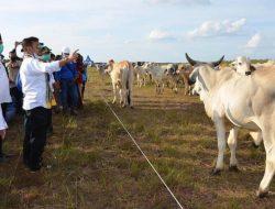 Mentan Puji Peternakan di Sukamara, Bupati Target 10 Ribu Populasi Sapi