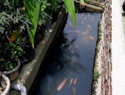 Kreatif, Warga Koja Manfaatkan Saluran Air Untuk Budidaya Ikan
