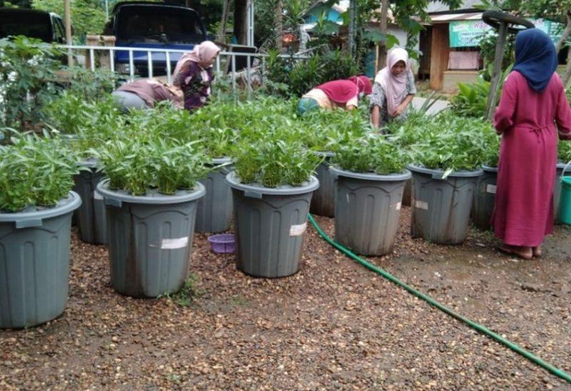 Wanita Muslimat Nahdlatul Ulama Kecamatan Karang Intan, Kabupaten Banjar, Kalimantan Selatan berhasil melakukan panen dari hasil Budikdamber