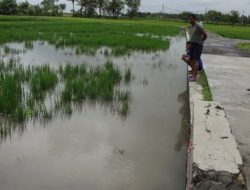 Hujan Deras di Kulonprogo, Ratusan Hektare Lahan Pertanian Rusak