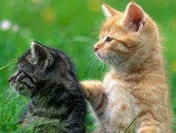 Penjelasan Ilmiah Mengapa Manusia Memilih Tak Mengonsumsi Hewan Peliharaan; Anjing atau Kucing