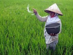 Nilai Tukar Petani Januari 2021 Naik, Kementan: Produksi Pertanian Tumbuh Positif