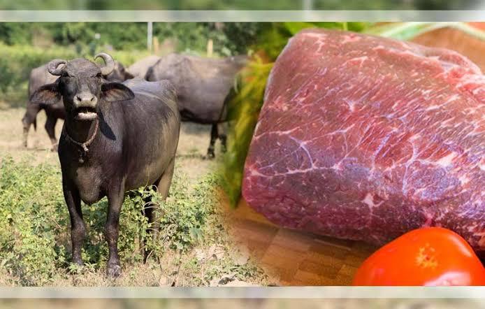 ILUSTRASI. Kerbau dan daging kerbau/kabarbisnis.com/IST.