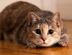 Bisakah Kucing Diberi Makan Nasi? Ini Penjelasan Dokter Hewan