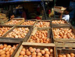Peternak Ayam Petelur di Ciamis Keluhkan Harga Telur yang Bikin Puyeng