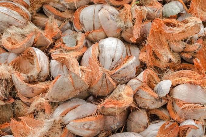 ILUSTRASI. Sabut kelapa/via medium/IST
