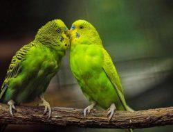 3 Jenis Burung Peliharaan Ini Baik untuk Tumbuh-Kembang Anak di Usia Dini