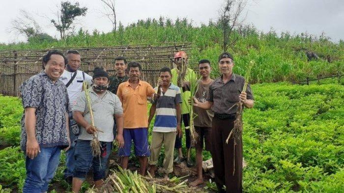 Para peternak di NTT/via Pos-Kupang.com/IST