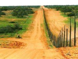 Kehadiran Anjing Liar Dingo Berdampak pada Lahan Pertanian di Australia