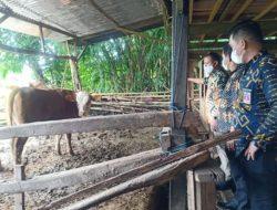 Takalar Pusatkan Pengembangbiakan Sapi di Kecamatan Polombangkeng Utara