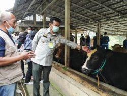 Semakin Diminati, Pendaftar Asuransi Perlindungan Ternak di Pringsewu Melebihi Target