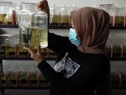 Omset Jual Beli Ikan Cupang di Kota Medan Raup Jutaan Rupiah Tiap Bulannya