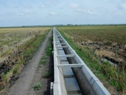 Sediakan Irigasi melalui P3A, Cara Kementan Dongkrak Produksi Pertanian