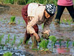 Tugas Besar di Balik Capaian Positif Sektor Pertanian Selama Pandemi