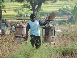 Seni Menikmati Kopi Ponorogo di Tengah Sawah yang Dibayar dengan Gabah