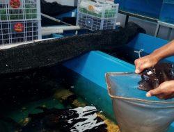 Serius Kembangkan Budidaya Ikan Hias, Pemkot Cimahi Targetkan PAD Rp 50 Juta