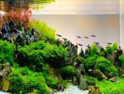 Ini 7 Jenis Ikan Hias yang Cantik dan Murah untuk Aquascape