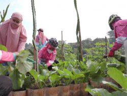 Inspiatif! Kelompok Tani Ini Menyulap Lahan Belukar Jadi Kebun Sayur di Tengah Kota